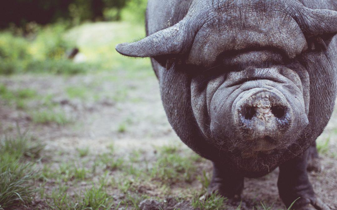 Especies Exóticas Invasoras. Una propuesta de intervención antropológica y no-antropocéntrica